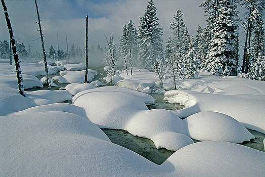 Heavy Snow In Yellowstone by Eric Albright