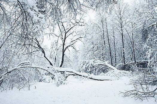 heavy snowfall by Iuliia Malivanchuk by Iuliia Malivanchuk