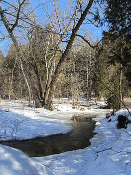 Heber Down Conservation Park by Sharon Steinhaus