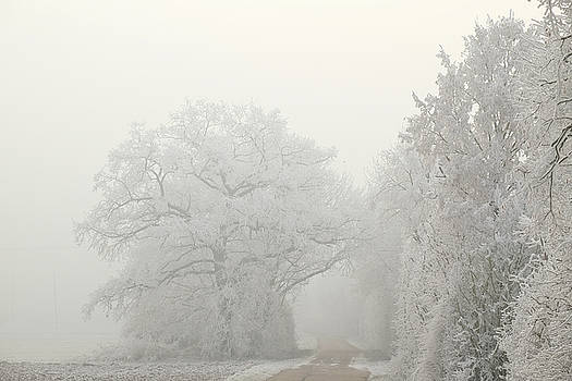 Martin Stankewitz - Hedge and oak trees in hoar frost winter landscape