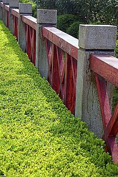Hedge and Red Fence by Lynn Vidler