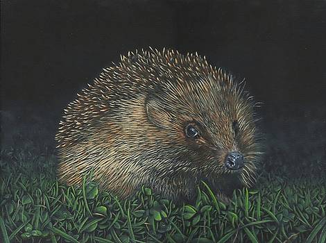 Hedgehog by John Neeve