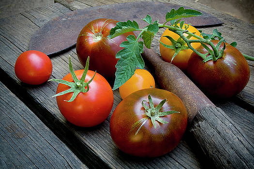 Heirloom Tomatoes with Garden Tool by Sharon Foelz