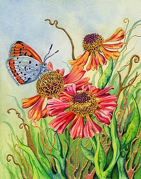 Helenium and Large Copper Butterfly by Lynne Henderson