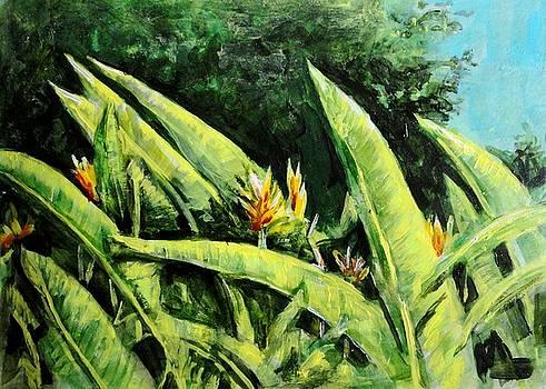 Usha Shantharam - Heliconia Flowers 6