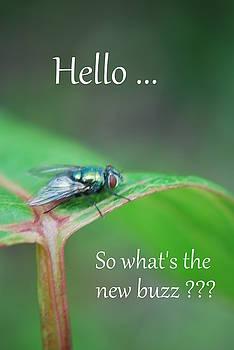 Hello - Card  by Michelle  BarlondSmith