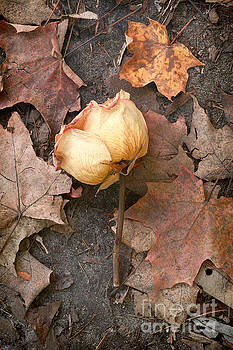 Hello Autumn by Mary  Smyth