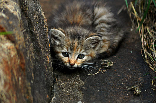 Hello Little Kitty by Eric Liller