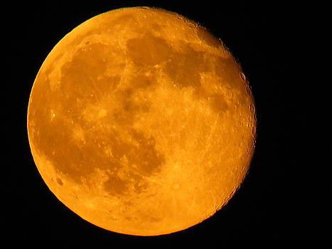 Hello Moon by Lori Frisch