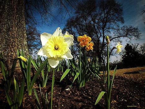 Hello Spring by Hannah Underhill