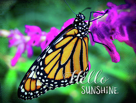 Hello Sunshine, orange monarch butterfly close-up by Marcia Luce at Luceworks