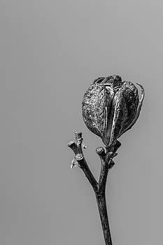 Hemerocallis Decomposed 2 by Nathan Larson