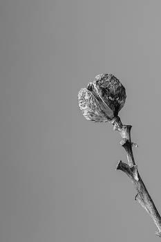 Hemerocallis Decomposed 3 by Nathan Larson