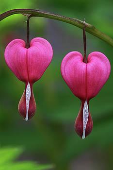Juergen Roth - Happy Valentine