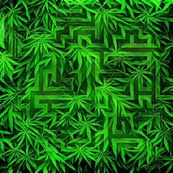 Hemp Maze by Bruce Rolff