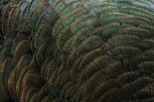 Dale Kauzlaric - Hen Turkey Feather Abstract