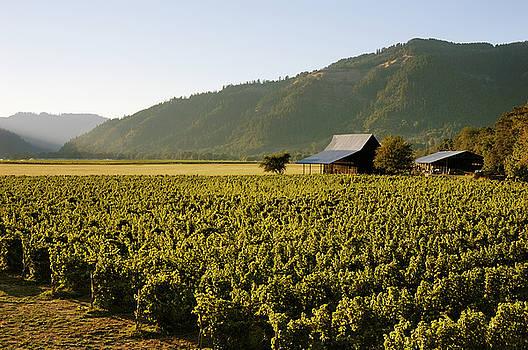 Henry Estate Vineyards by Greg Vaughn