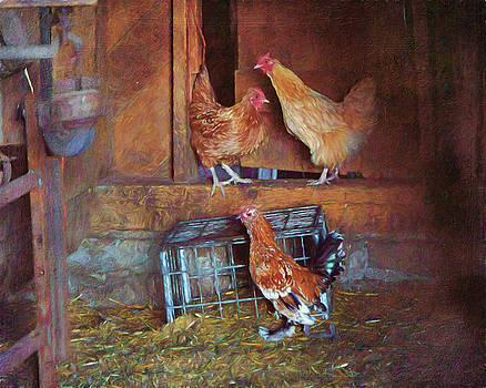 Nikolyn McDonald - Hens - Barn