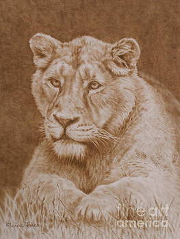 Her Majesty the Lioness by Elaine Jones