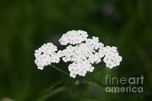 Omaste Witkowski - Herbal Excursions Methow Valley Flowers by Omashte