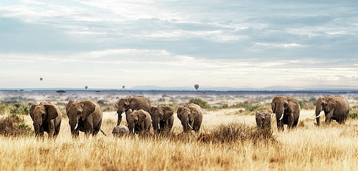 Herd of Elephant in Kenya Africa by Susan Schmitz