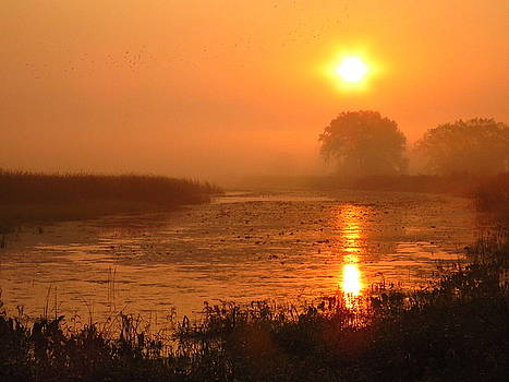 Here Comes the Morning by Lori Frisch