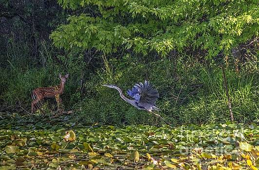 Heron and Doe by Denny Ragan
