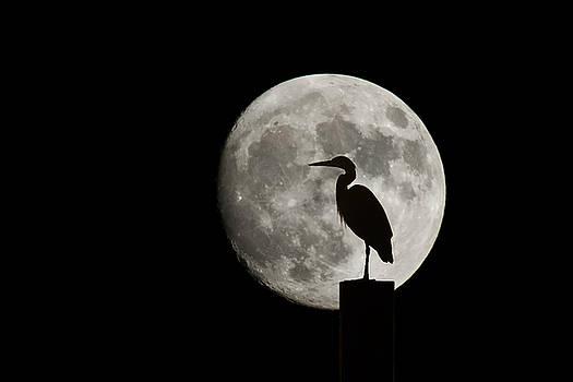 Heron and Full Moon by Keith Marsh