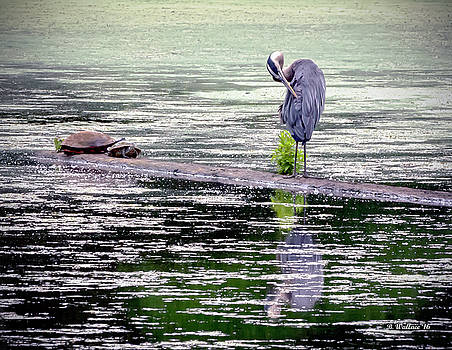 Heron And Turtles by Brian Wallace