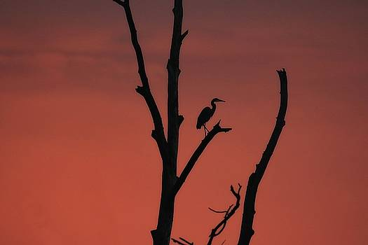 Heron At Dawn by Rod Flauhaus