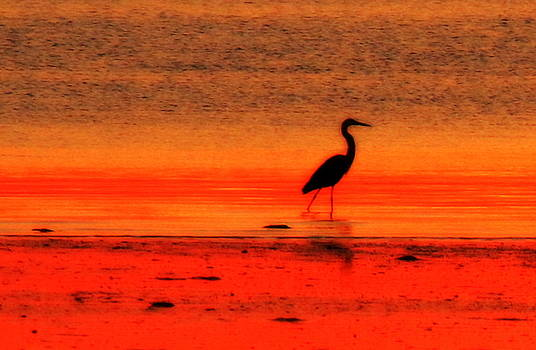 Heron at Dawn by Suzanne DeGeorge