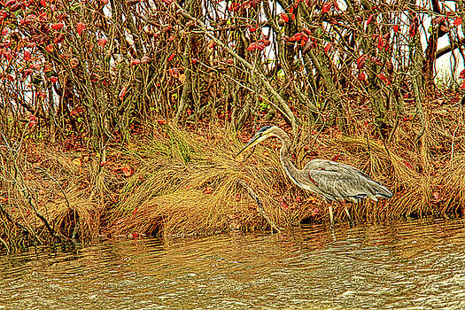 Heron at Forsythe Wildlife Reserve in fall foliage by Geraldine Scull