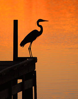 Clayton Bruster - Heron At Sunset