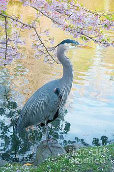 Heron - Beacon Hill Park by Michael Wheatley