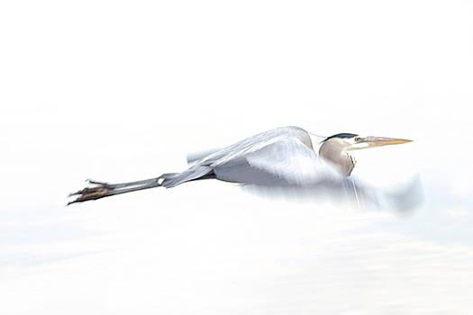 Heron Blur by Uli Degwert