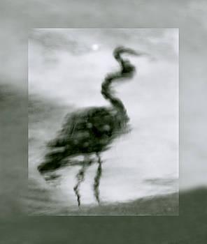 Linda McRae - Heron de Nacht