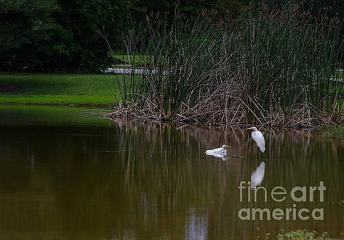 Dale Powell - Heron Estuary