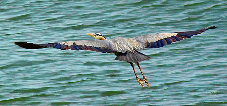 Heron in Flight by Rick Lawler