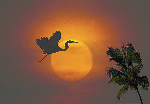Heron in Sunset by Richard Nickson