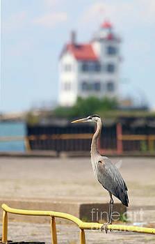 Heron in the Harbor by Debbie Parker