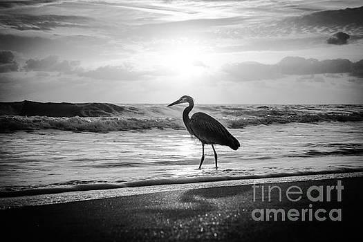 Heron In The Surf by Eddy Mann