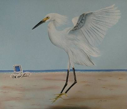 Heron landing on the beach by Joan Mansson