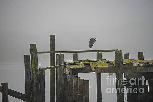 Heron on a Pier by Steven Natanson
