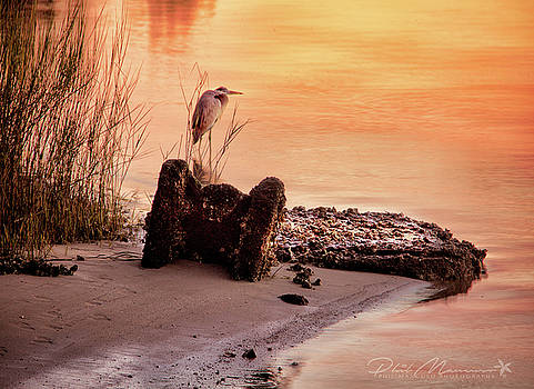 Heron On The Rocks by Phil Mancuso