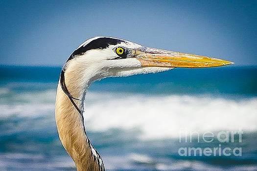Heron Profile by Eddy Mann