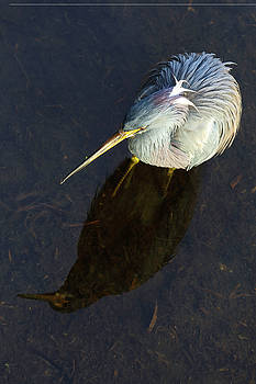 Heron Reflection by Juergen Roth