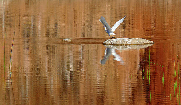 Heron Tapestry by Evelyn Tambour