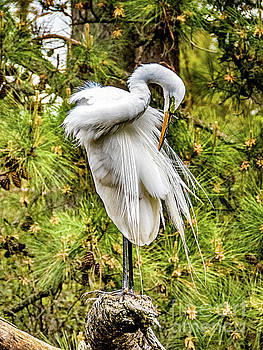 Heron by Trish Casey-Green