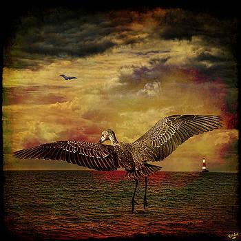 Chris Lord - Herons