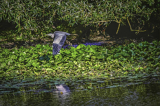 Heron's escape #h8 by Leif Sohlman
